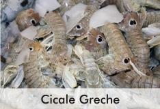 cicale_greche_2