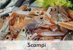scampi_2