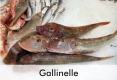 gallinelle_1