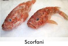 scorfani_0