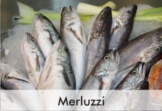 merluzzi_2