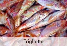 trigliette