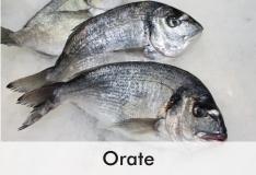 orate_0
