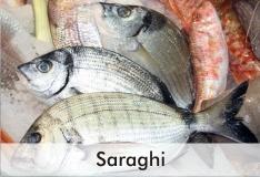sarago_2