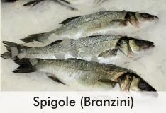 spigole_0