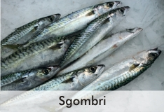 sgombri_0